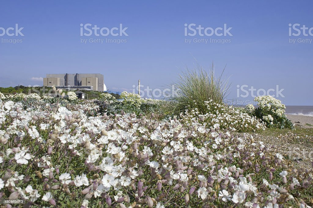 Sizewell beach stock photo
