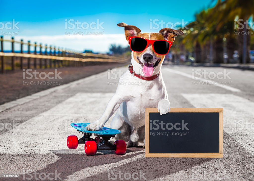 skater dog on skateboard stock photo