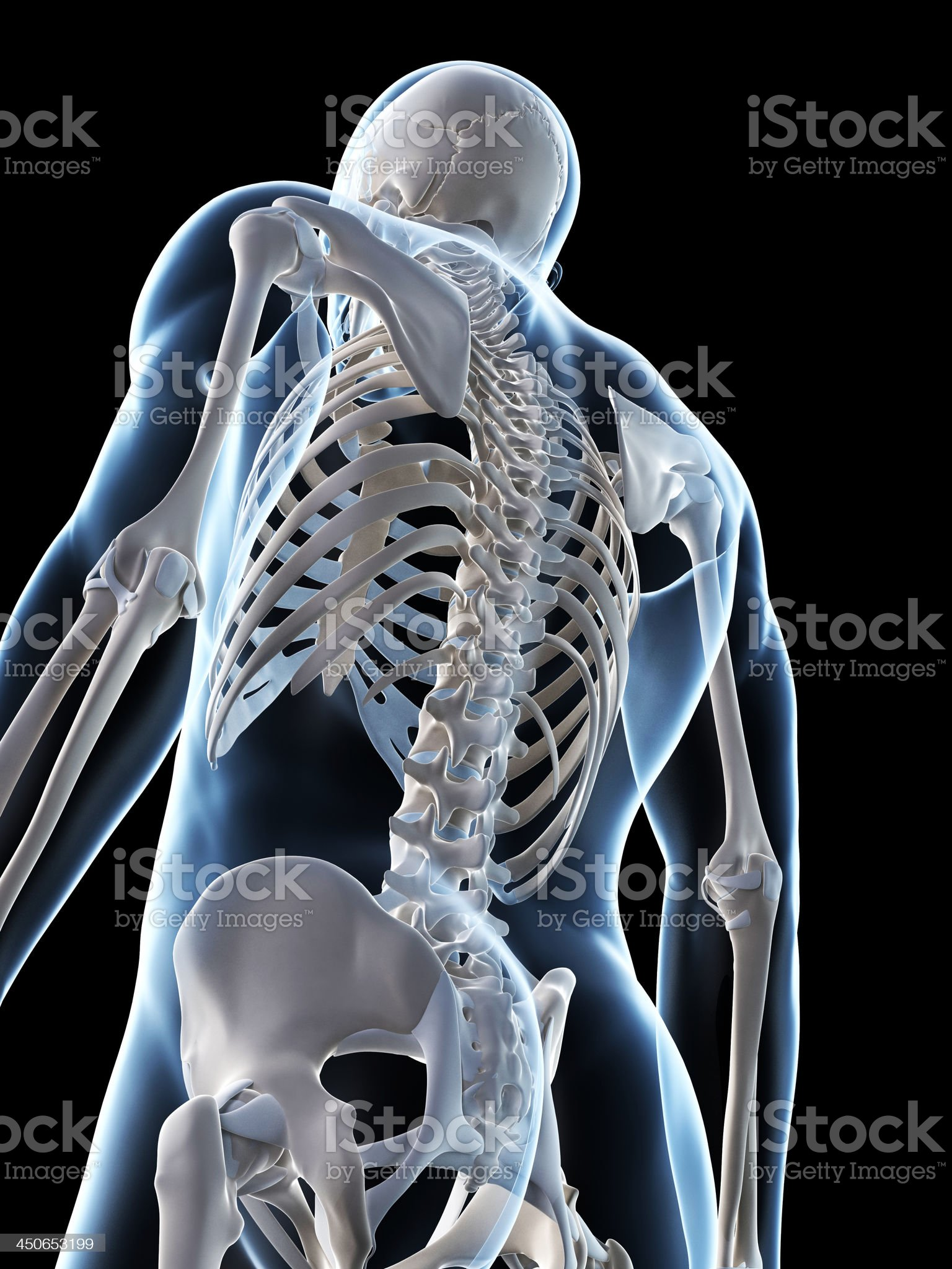 skeletal back royalty-free stock photo
