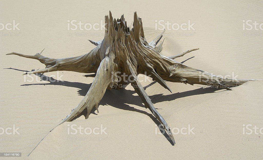 Skeletal carcase of dead tree royalty-free stock photo