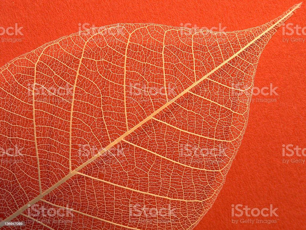 Skeletal Leaf on Red royalty-free stock photo