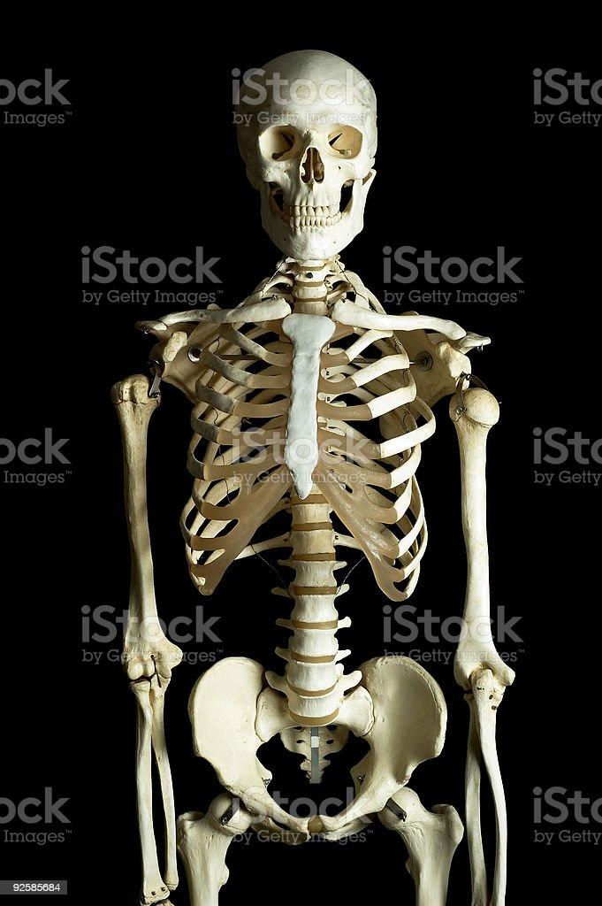 Skeleton 4 royalty-free stock photo