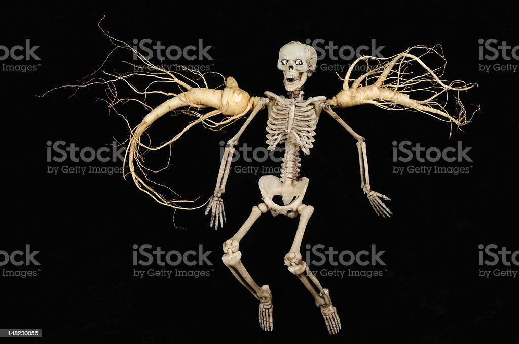 Skeleton and Fresh Ginseng Root stock photo