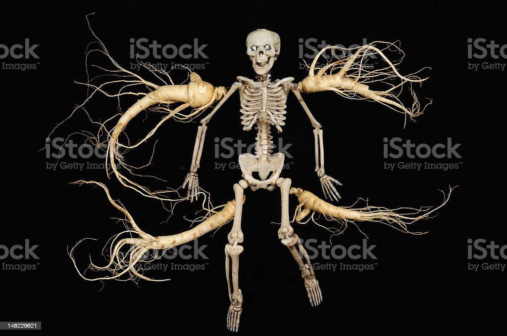 Skeleton and Fresh Ginseng Roots royalty-free stock photo