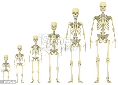 skeleton evolution stock photo 136191262 | istock, Skeleton