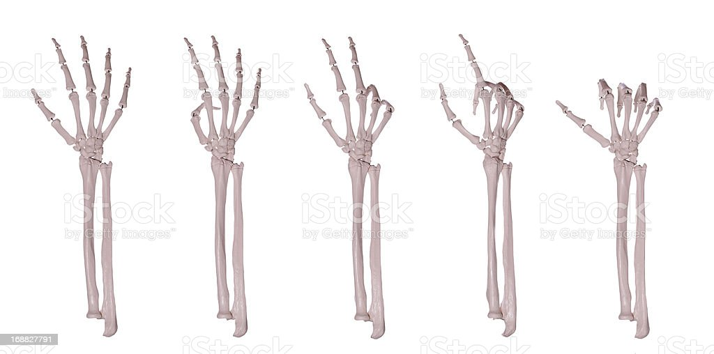 skeleton hands counting 1-5 stock photo