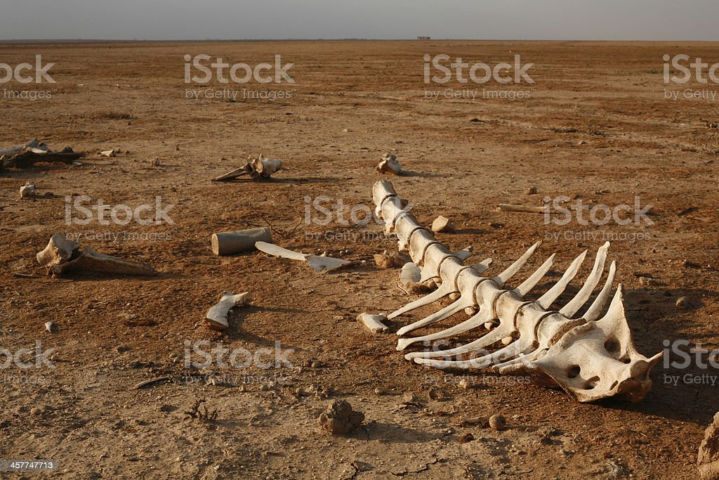skeleton in desert stock photo