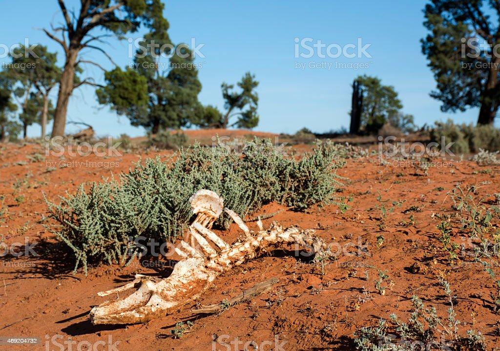 Skeleton in desert stock photo