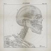 Skeleton medical illustration. 3D Illustration.