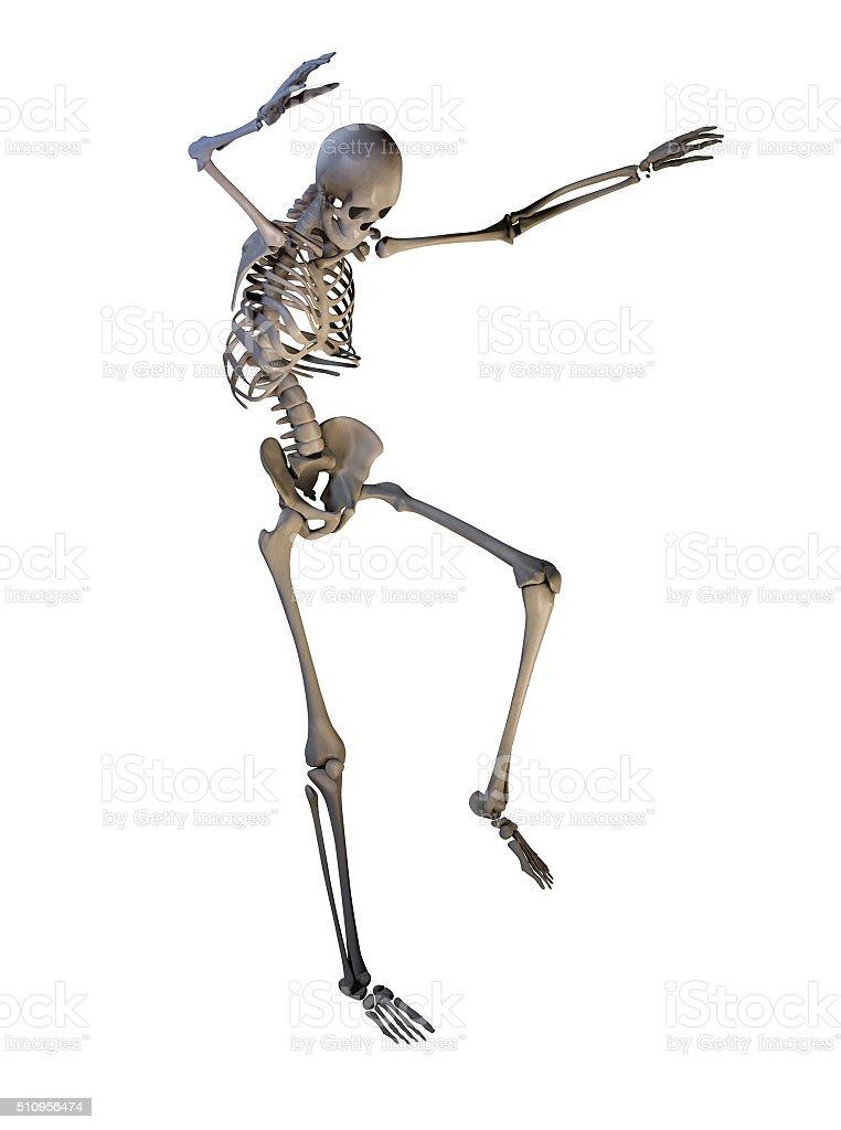 Skeleton stock photo