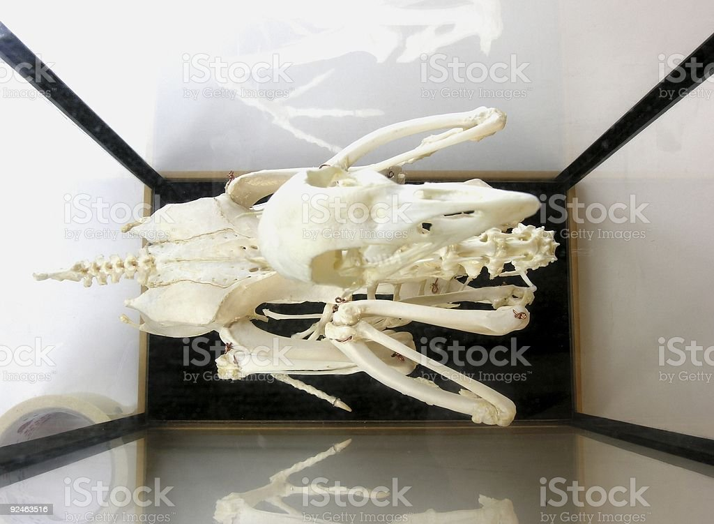 Skeleton royalty-free stock photo