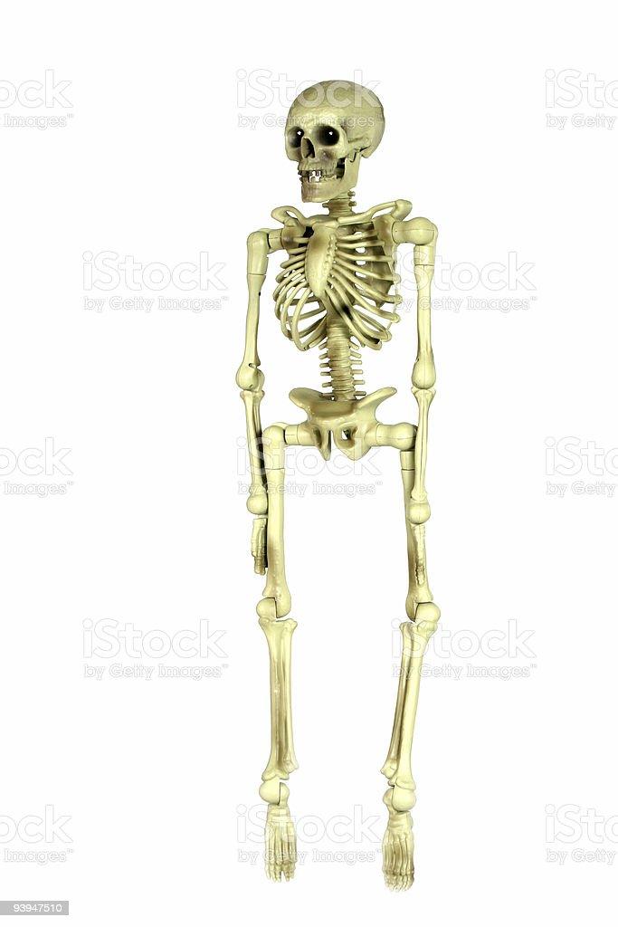 Skeleton royalty-free stock photo