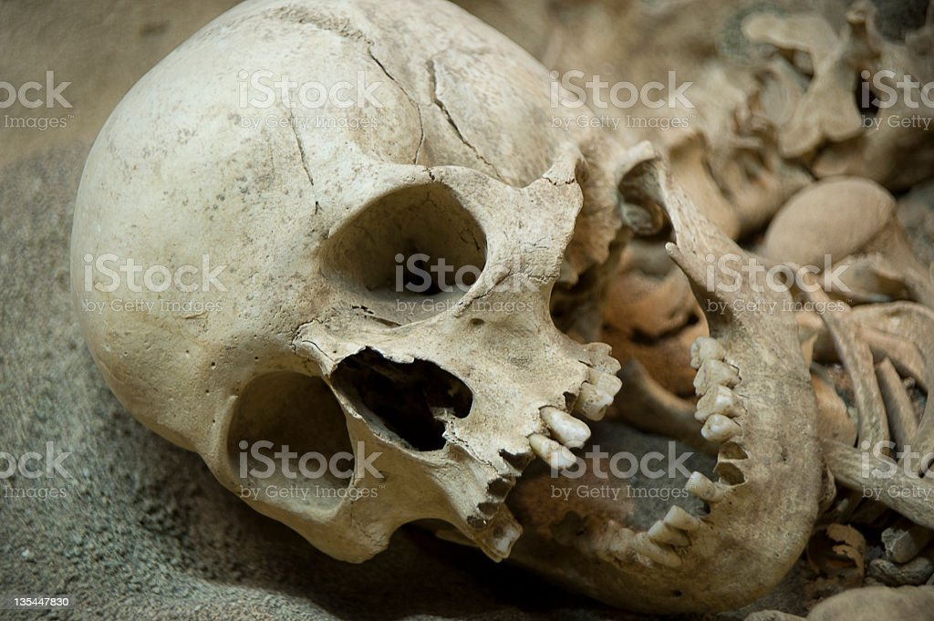 Skeleton remains of human looking to the side  stock photo