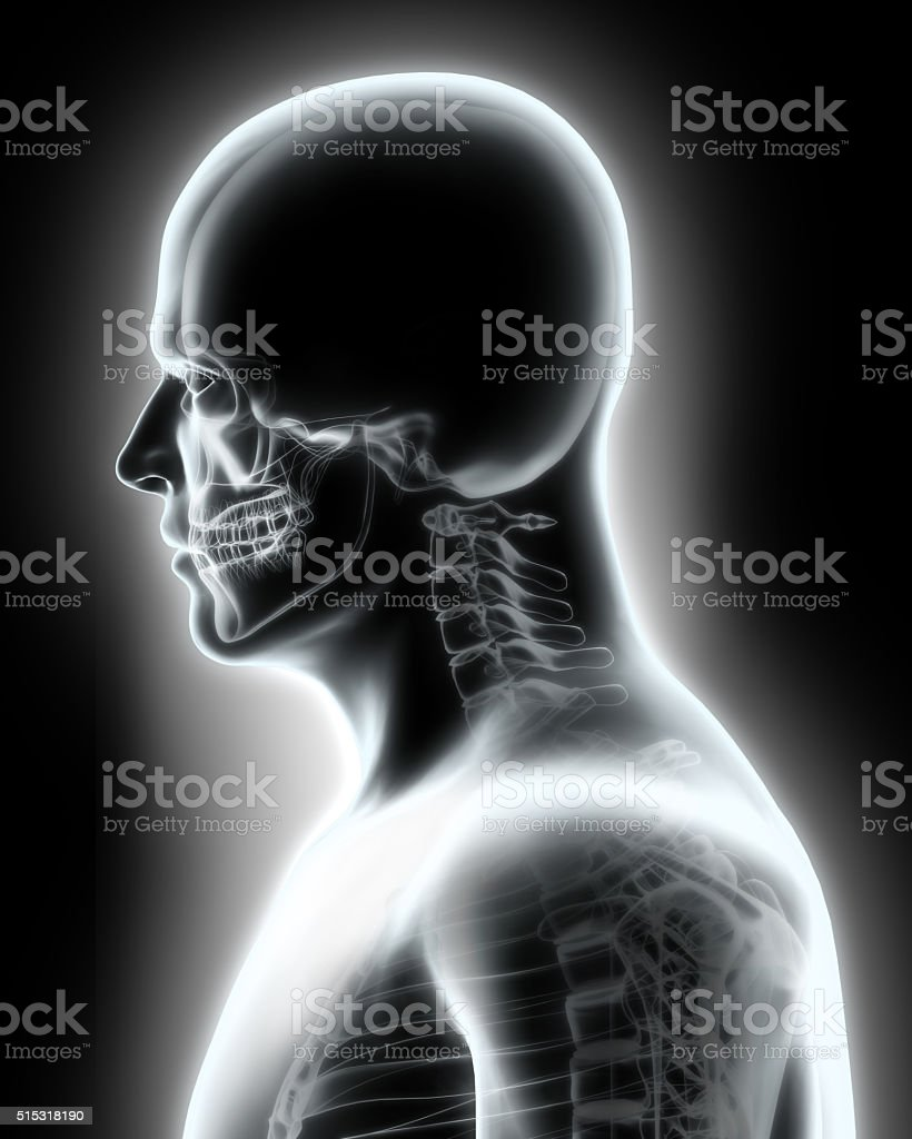 Skeleton System - X-ray upper part human. stock photo