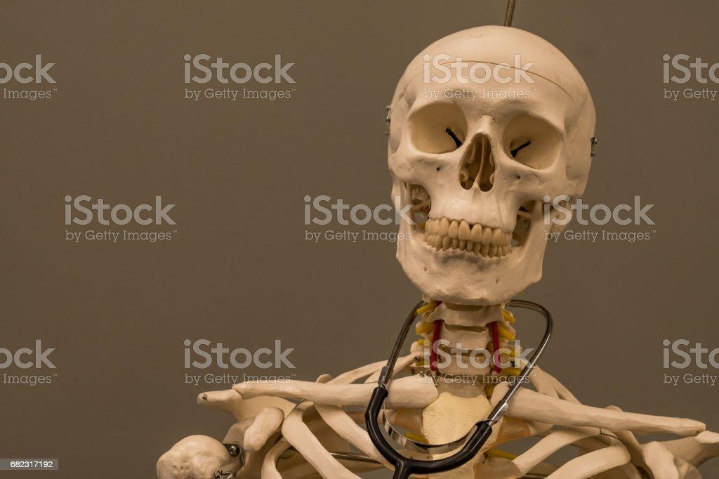 Skeleton with Stethoscope stock photo