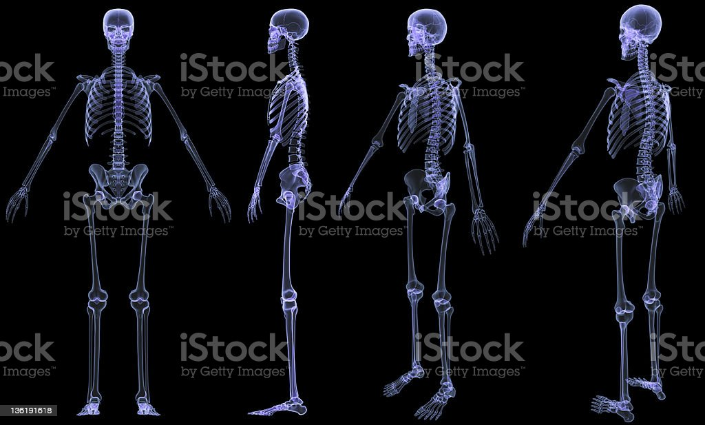Skeleton-4 views x-ray stock photo
