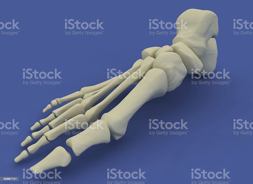 skeletor foot royalty-free stock photo