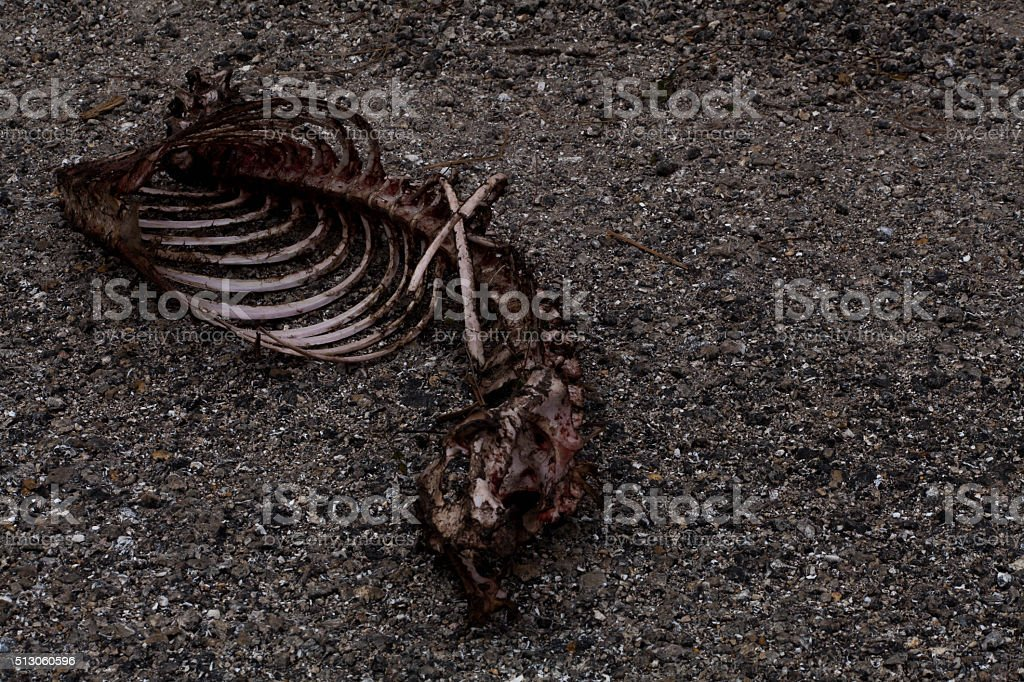 skelleton is all thats left. stock photo