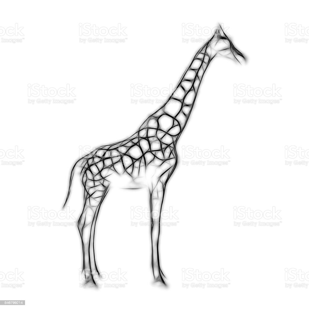 Sketch of shark on white background isolated stock photo