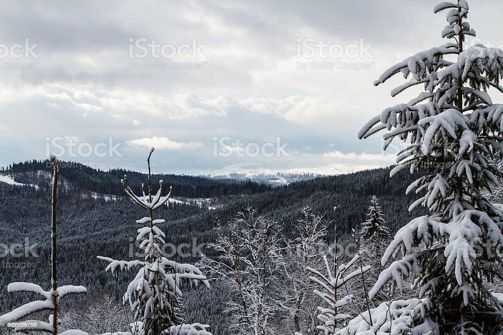 Ski resort Bukovel, Ukraine. stock photo