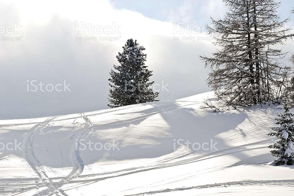 ski run around fir tree in Dolomites, Italy stock photo