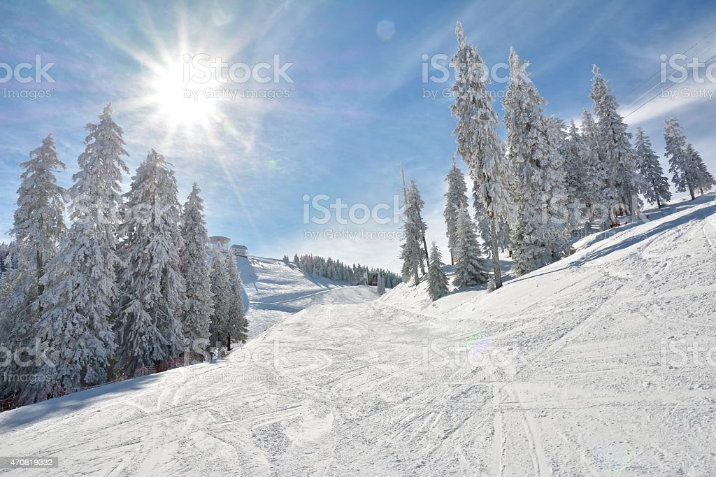 Ski slope and snow covered trees stock photo
