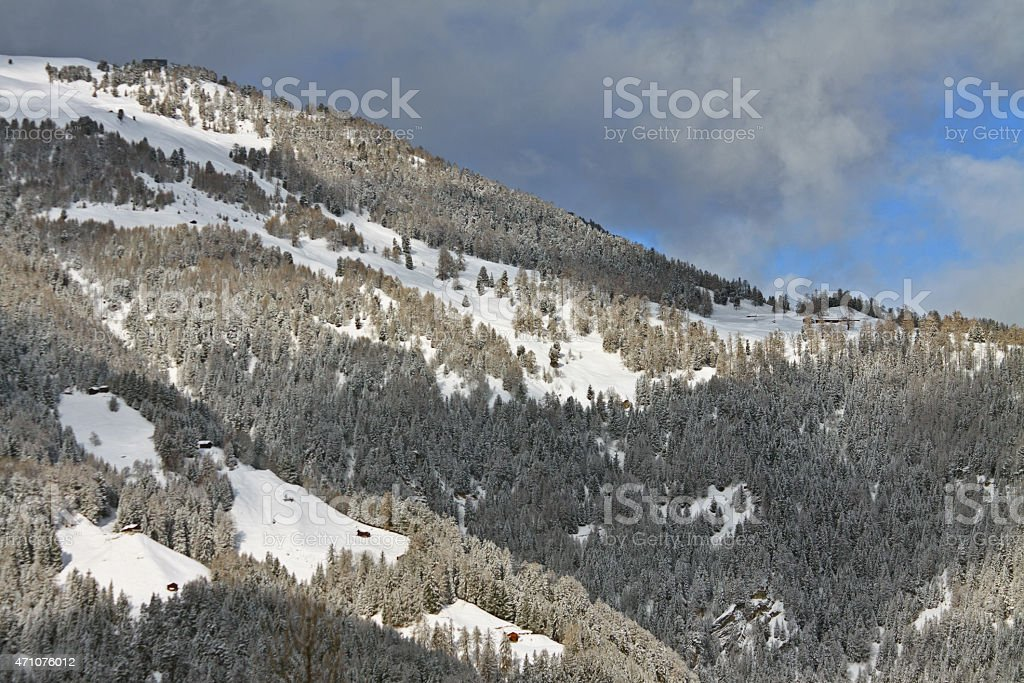 Ski slopes and pine trees with sun lighting stock photo