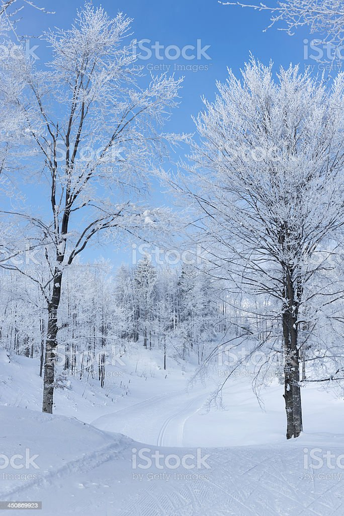 Ski Track and Bautiful Frosty Forest Winter in Slovenia stock photo