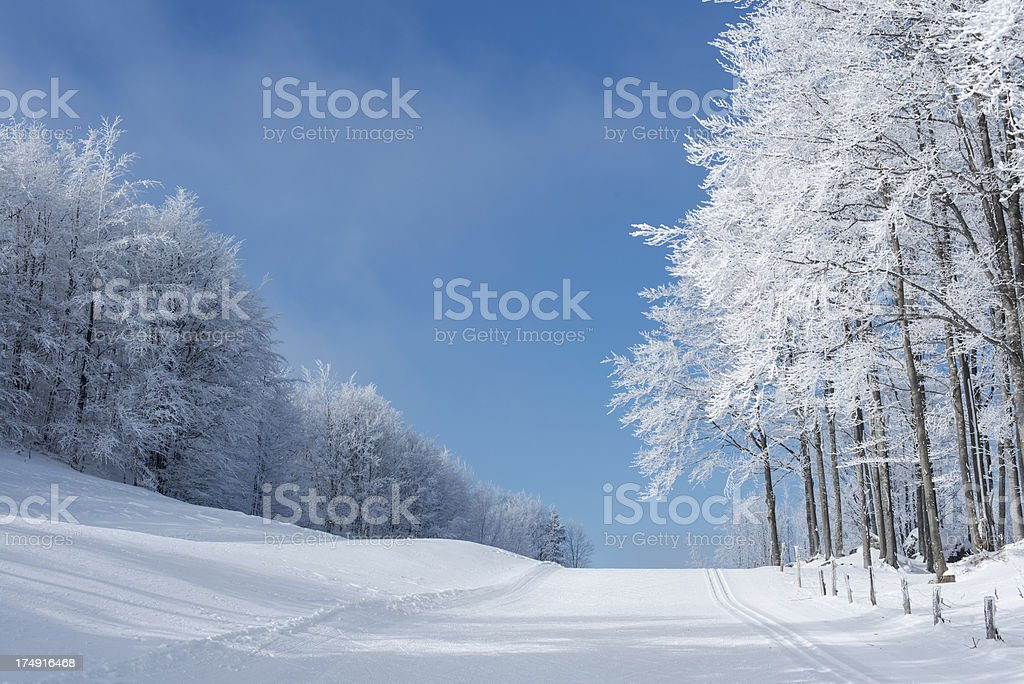 Ski Track and bBautiful Frosty Forest Winter in Slovenia stock photo