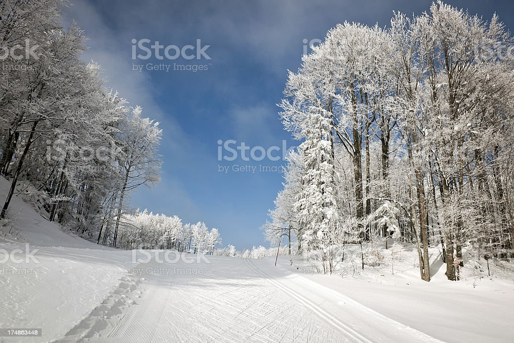 Ski Track and Frosty Forest Winter in Slovenia stock photo