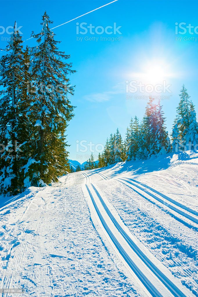 Ski track in the forest stock photo