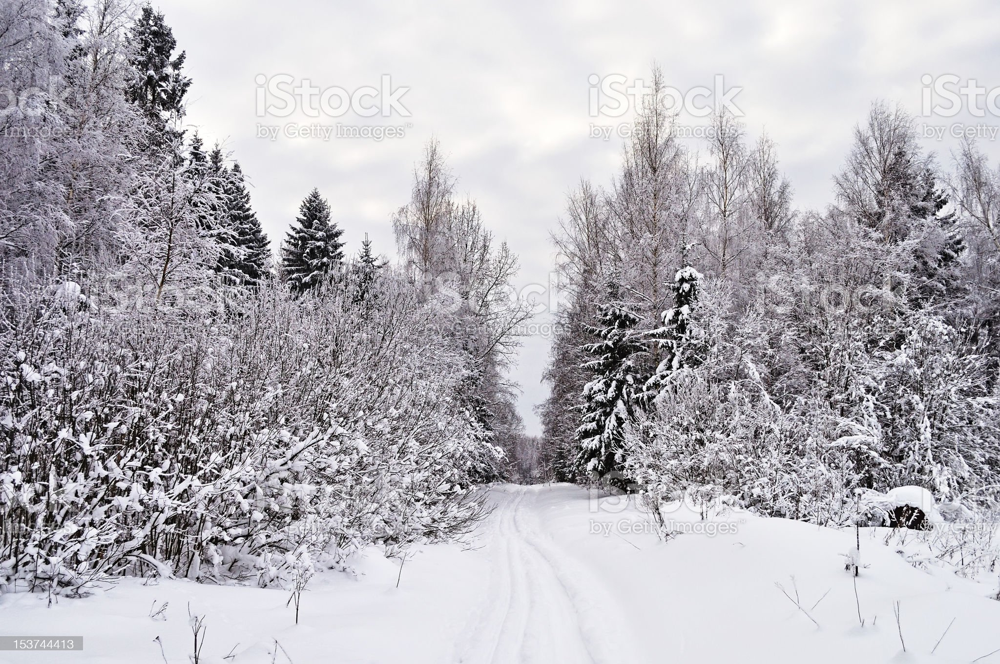 Ski track in winter forest glade royalty-free stock photo