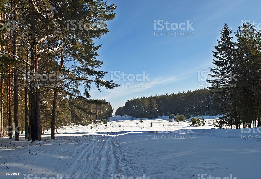 Ski track in winter forest royalty-free stock photo