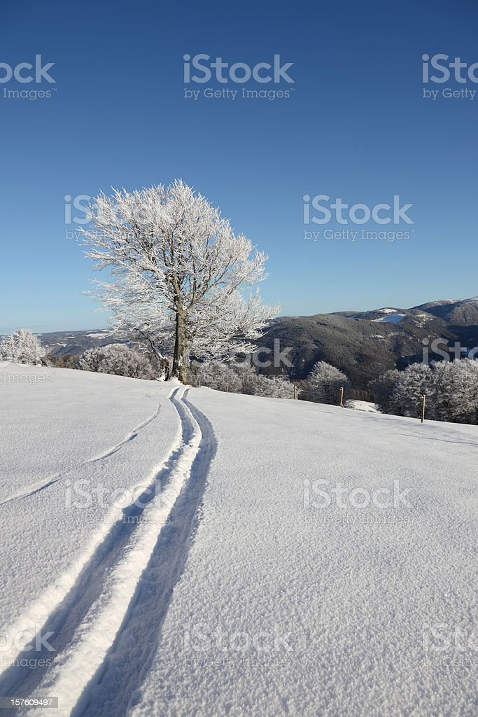 ski tracks in the snow royalty-free stock photo