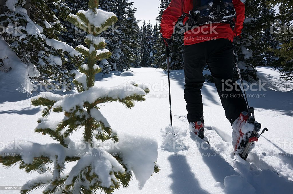 Skier Ski Touring in Fresh Snow royalty-free stock photo