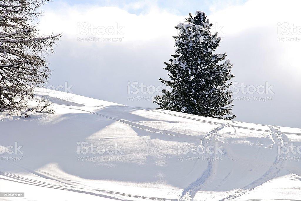 skiing tracks around fir tree in Dolomites, Italy stock photo