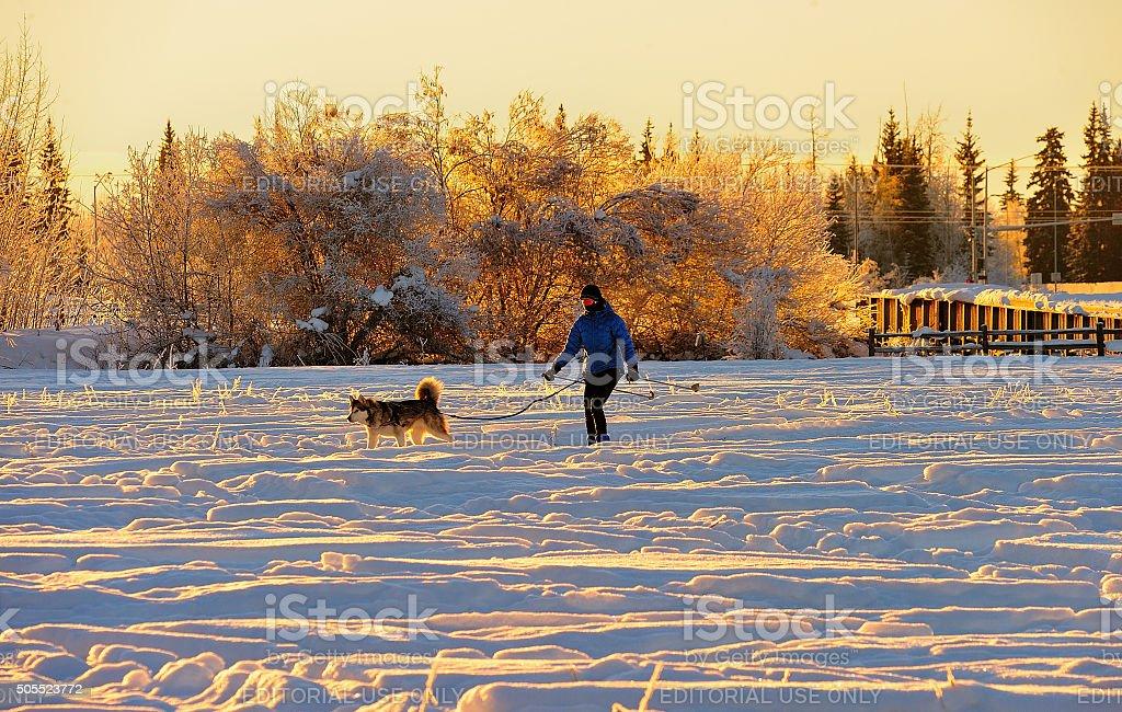 Skijoring in the Sun stock photo