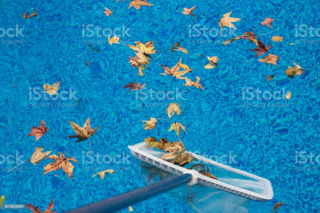 Skimming leaves from a swimming pool stock photo