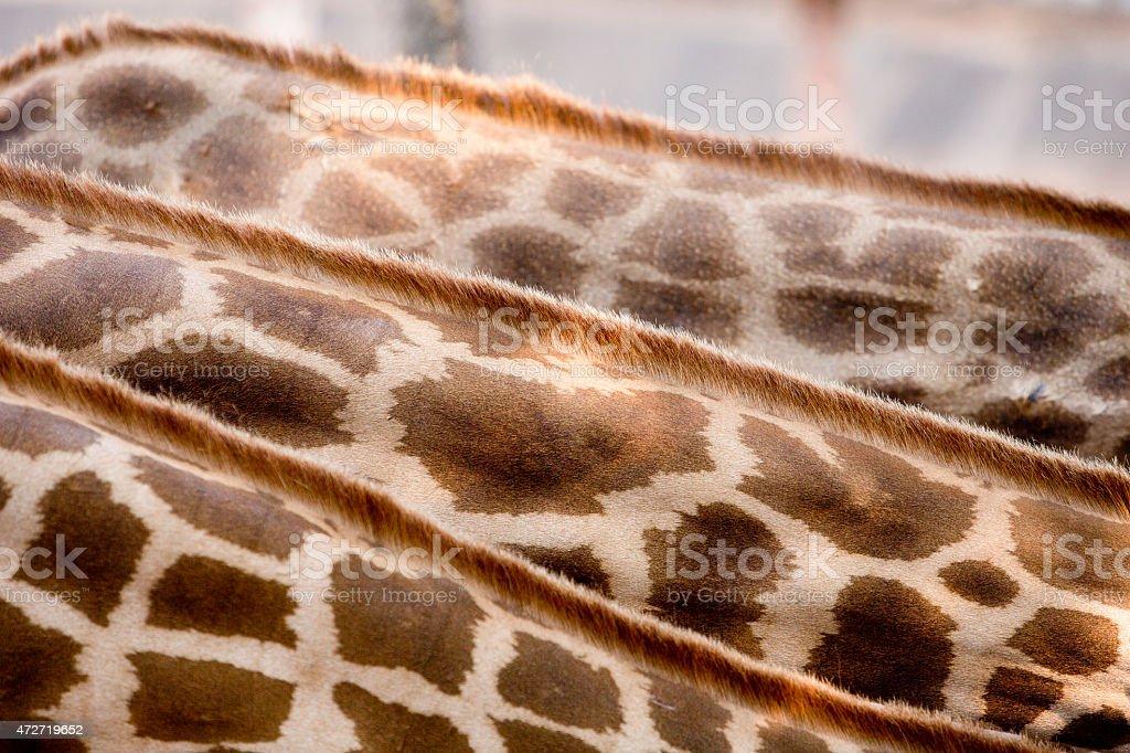 Skin and feather Giraffe. stock photo