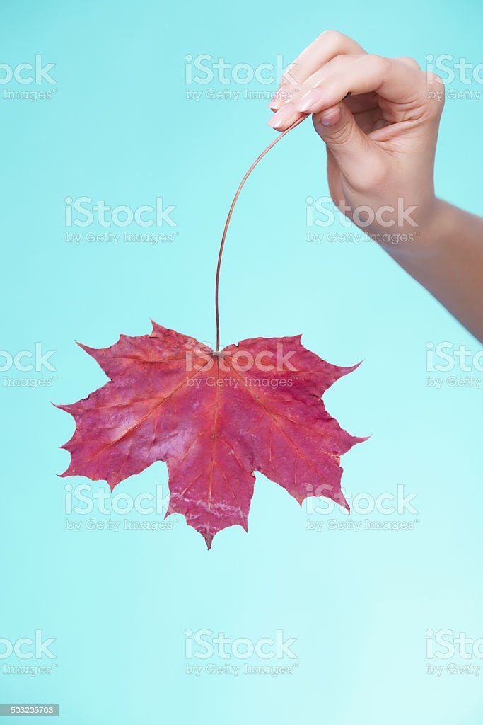 Skin care. Face of young woman girl with red leaf. royalty-free stock photo