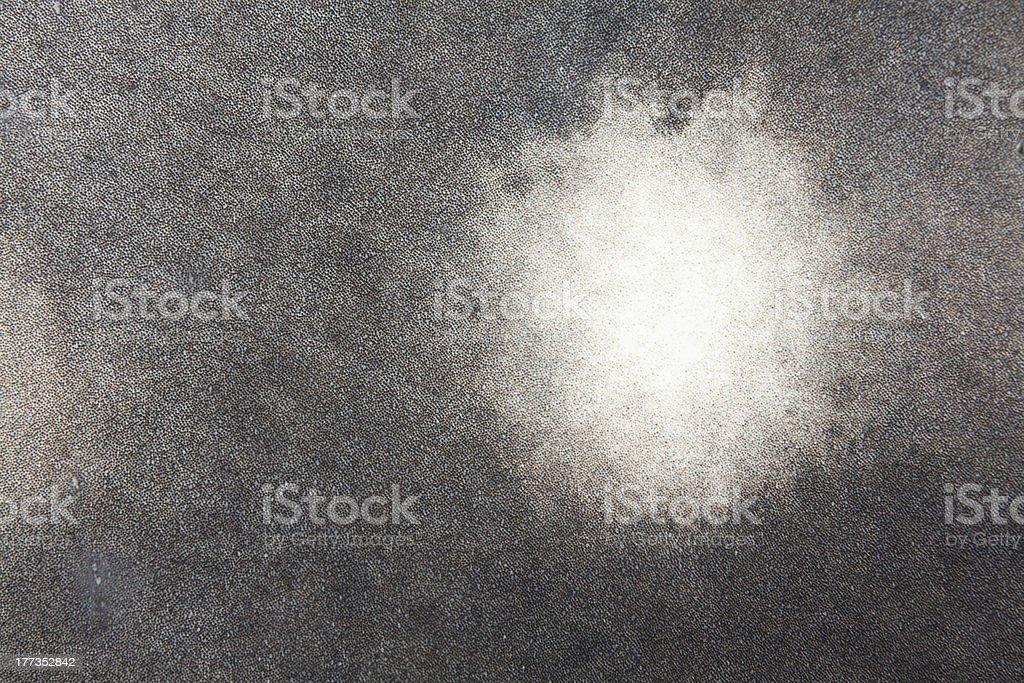 Skin Details around White Spot of Whale Shark, Cenderawasih, Indonesia stock photo