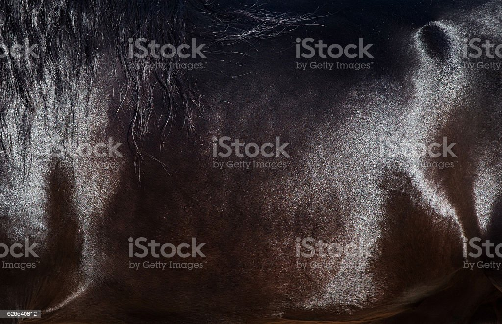 Skin of horse closeup. stock photo