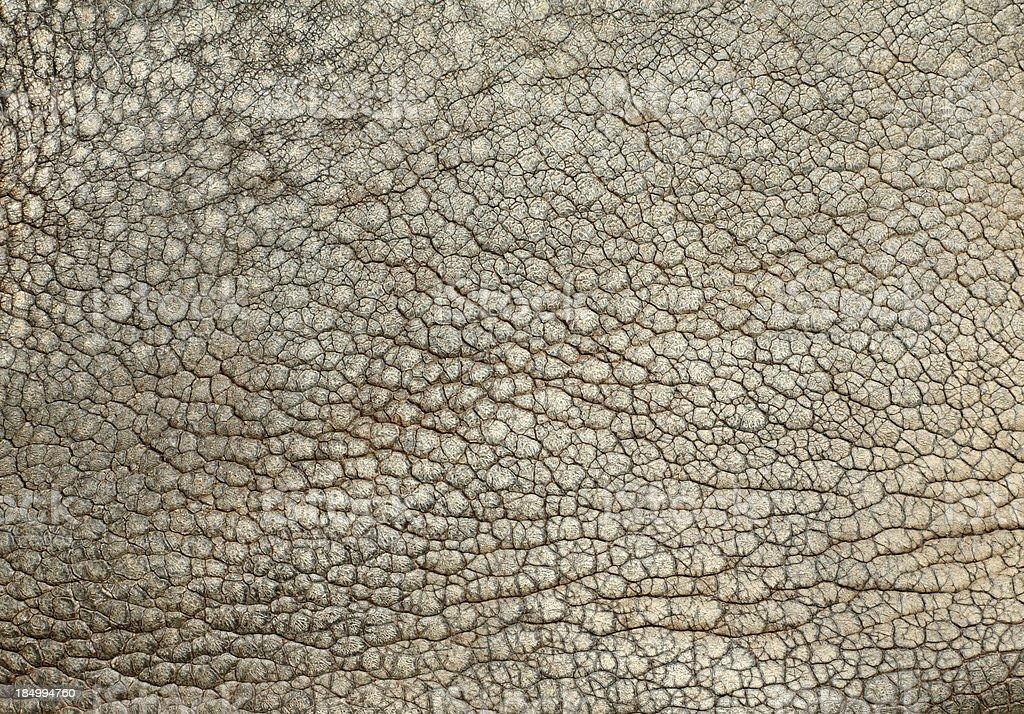 Skin Of The Indian Rhinoceros (Rhinocer. unicornis) stock photo