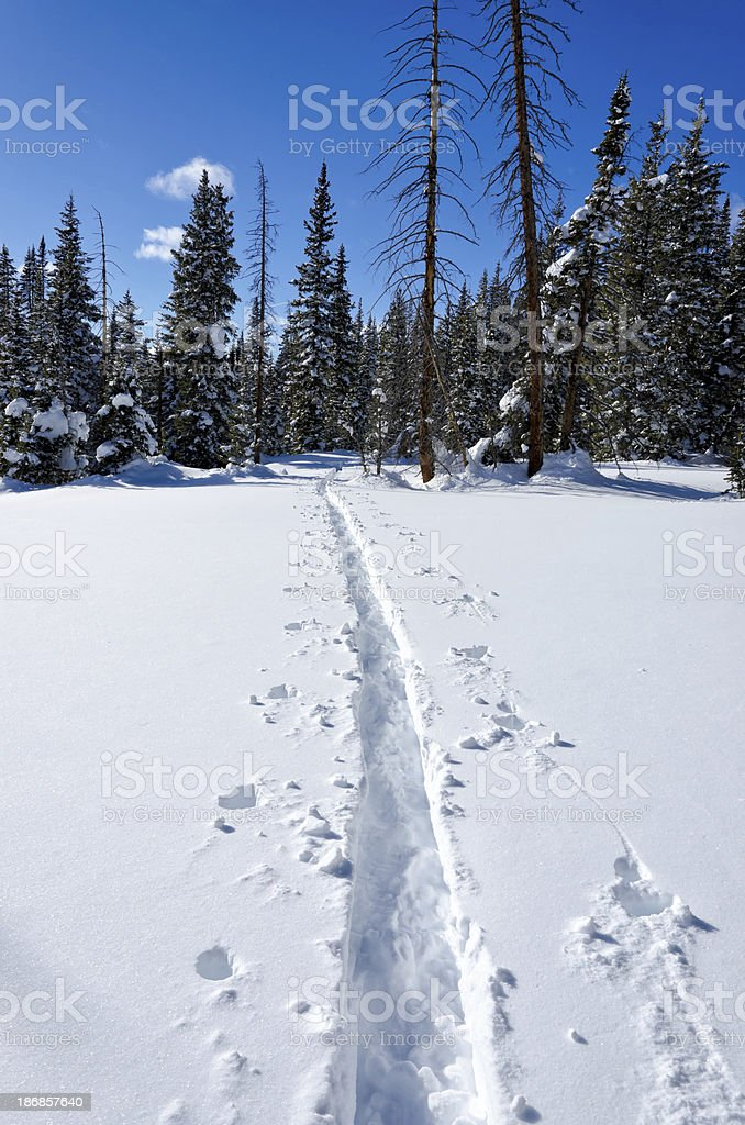 Skin Track in Snow Through Mountain Forest royalty-free stock photo