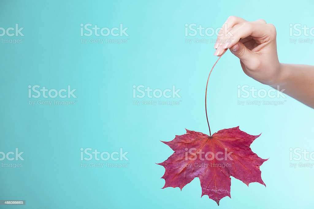Skincare. Hand with leaf as symbol red dry capillary skin. royalty-free stock photo
