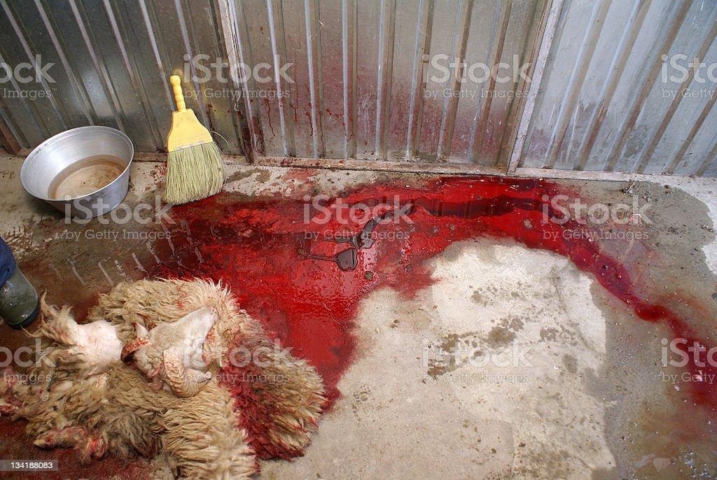 Skinned Lamb stock photo