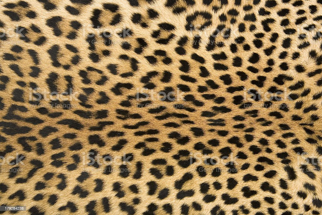 Skin's texture 2 of leopard stock photo