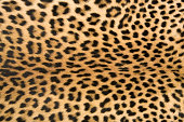 Skin's texture 2 of leopard