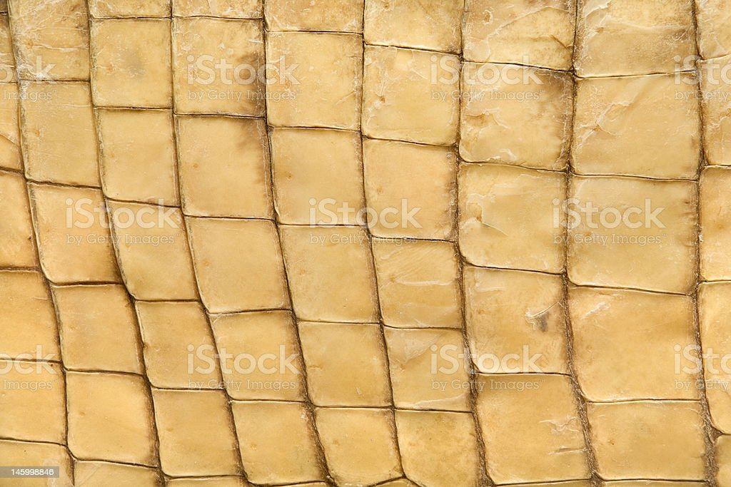 Skin's texture of crocodile royalty-free stock photo
