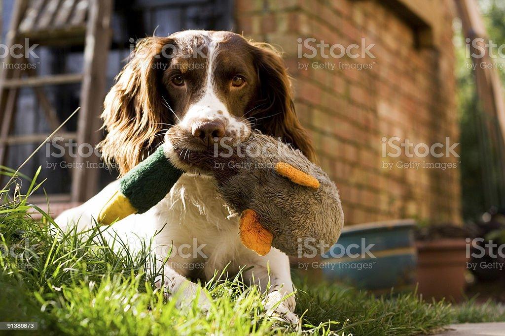 Skip & Duck... stock photo